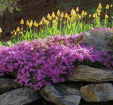 Virágzó támfal