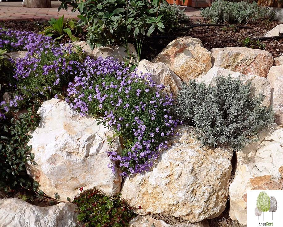 Egy éves sziklakert Érd, kora tavasszal
