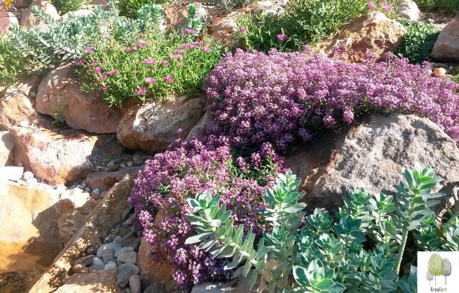 Sziklakerti növények, KreaKert Kft.